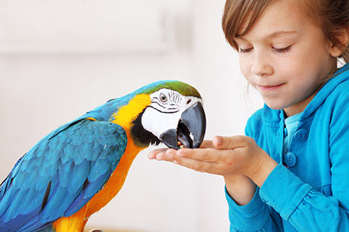 Photo of a child feeding a pet parrot. The parrot is treated by the Exotic and Bird Clinic of New England, which provides specialized veterinary care required by pet birds such as parrots, macaws, cockatiels, cockatoos, finches, parakeets, and conures.